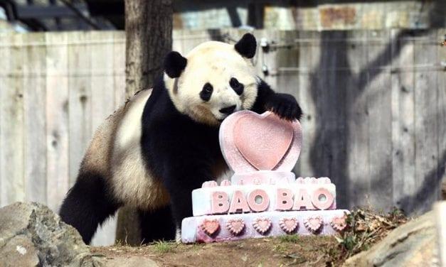Bye Bye Bao Bao!