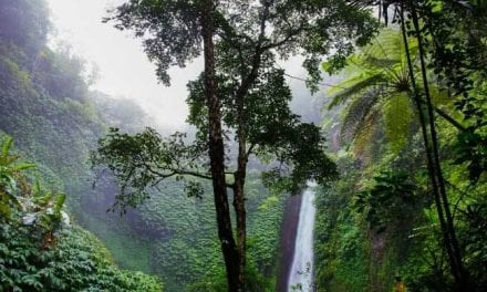 GMS Raises $1200 for the Rainforest