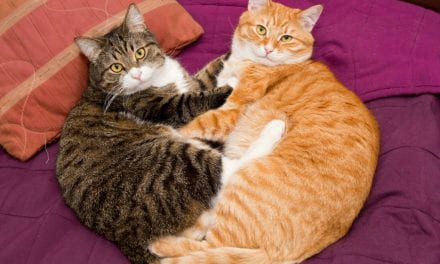 2 Cats in NY Test Positive For Coronavirus