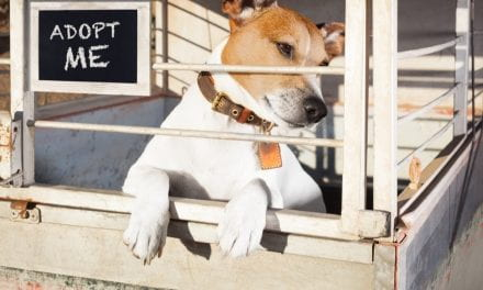 How Some Animal Shelters Are Finding Homes For The Animals