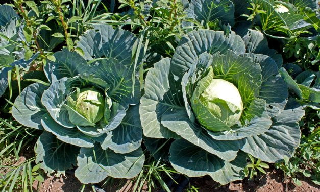 Warren High Was a Cabbage Patch?