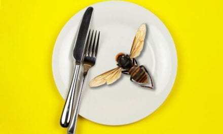 Deadly Japanese Hornets arrive in the U.S. and are viewed as a pleasant snack?
